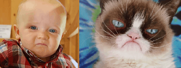 graham&grumpycat