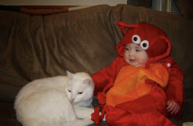 Baby in Lobster Halloween costume