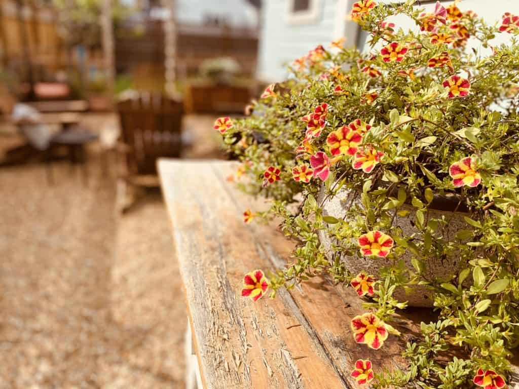 flowers on an old table